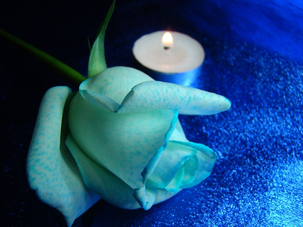 White Blue Rose Candle Blue Colour Images Candles Wallpaper Blue Candles