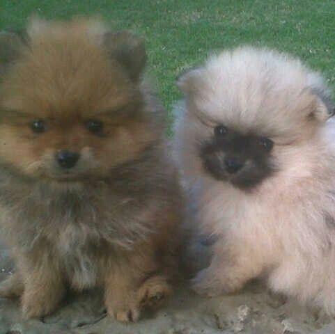 Meet Mum's new Pup Milay!