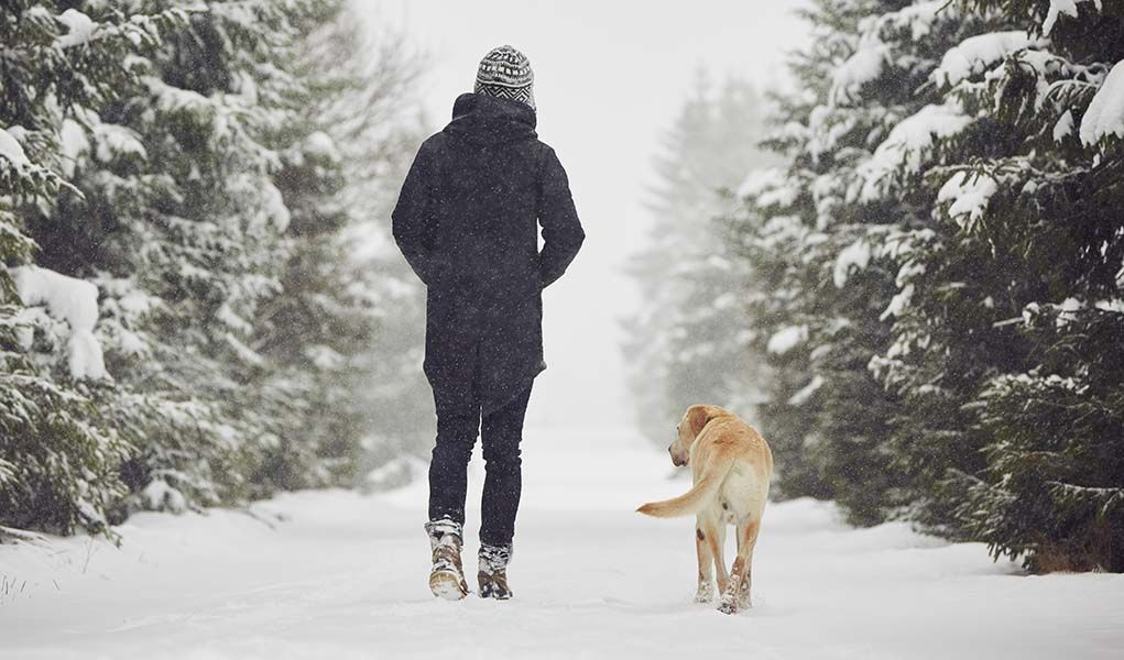 9 Safety Tips For Walking Dogs In Winter Losing A Dog Dog Walking Yellow Labrador Retriever