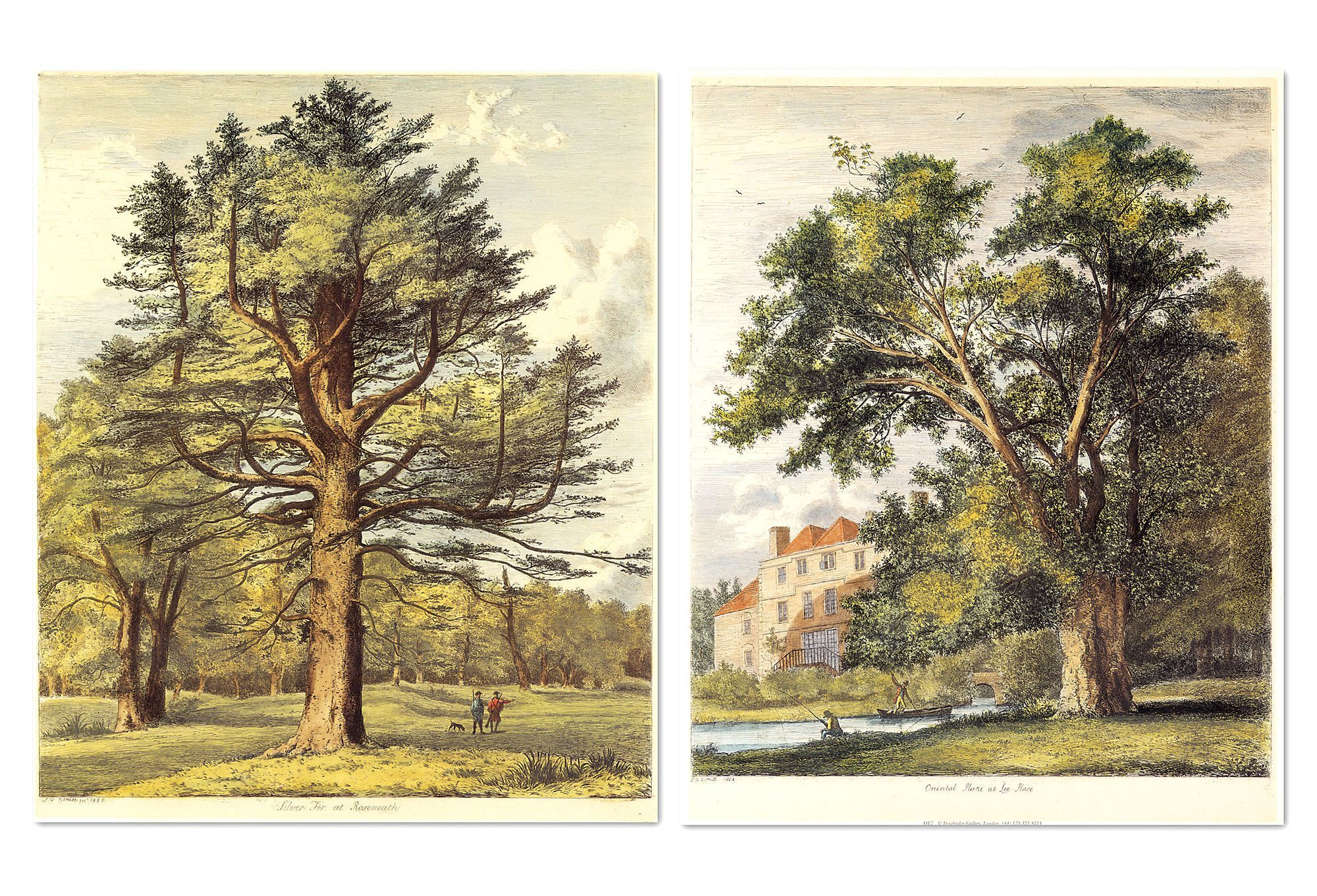 """Jacob G. Strutt, Trees II, Set of Two -- A set of two vintage reproductions of """"Silver Fir at Rosemeath"""" and """"Oriental Plane at Lee-Place"""" by English artist Jacob George Strutt, done in the style of Constable. Published in 1826, Strutt's """"Sylva Britannica"""" is a selection of """"portraits of forest trees distinguished for their antiquity, magnitude and beauty."""""""