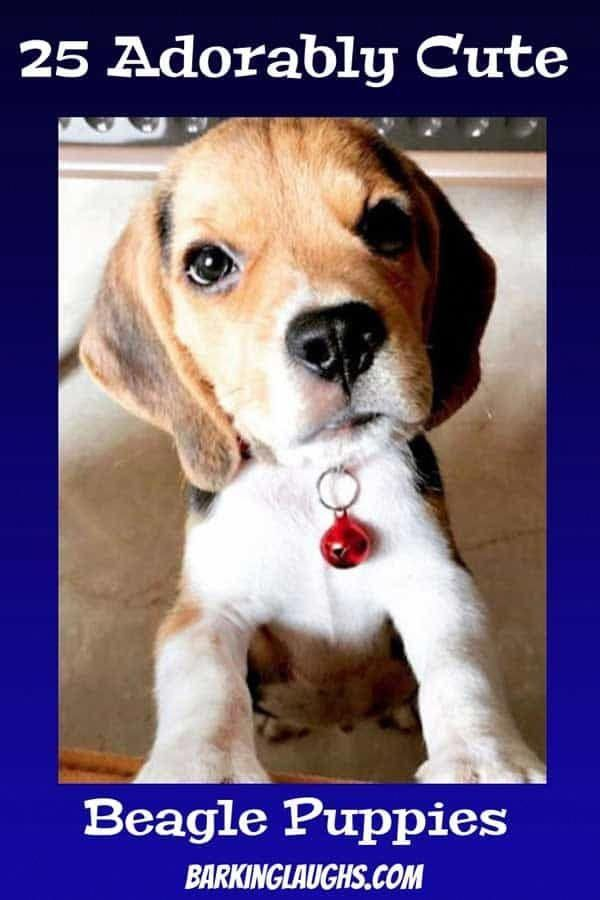 Help Me Train My Dog Dogtrainingatlanta Beagle Puppy Beagle