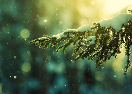 #christmastrees