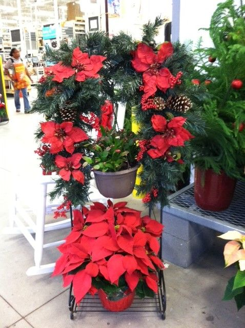 A Hanging Basket Stand With Holiday Flowers By Rambo Nursery Available At Home Depot Poinsettia Christmas