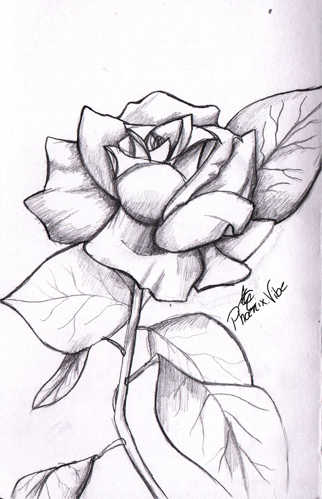 Phoenix Creations Rose Drawings For Boyfriend Roses Drawing Easy Flower Drawings