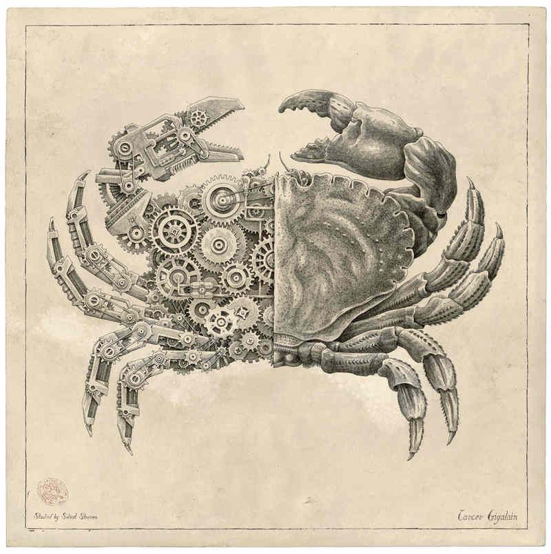 Dibujos De Los Crustaceos