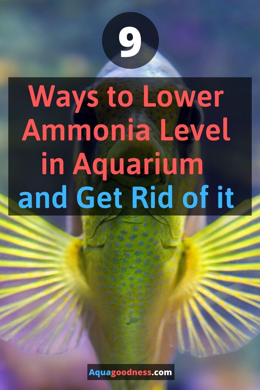 2152cc3d981d405687ec0bbc55a268a9 - How To Get Ammonia Out Of My Fish Tank