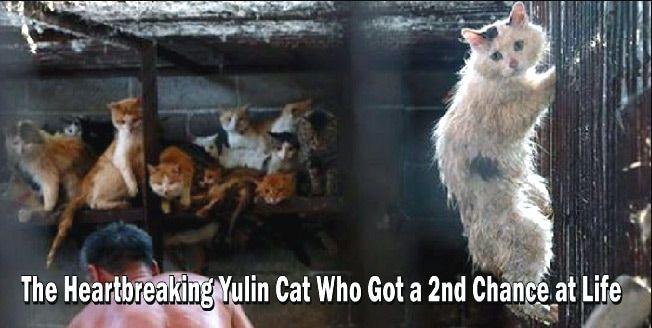 Huru The Yulin Festival Cat Yulin Cats Festival