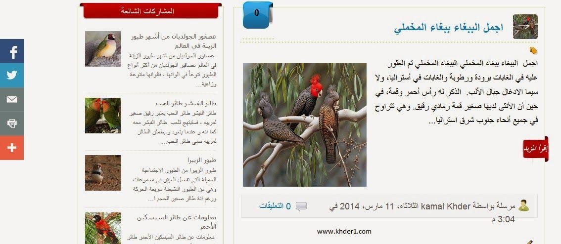 قالب مدونة تغريد الطيور مجانا
