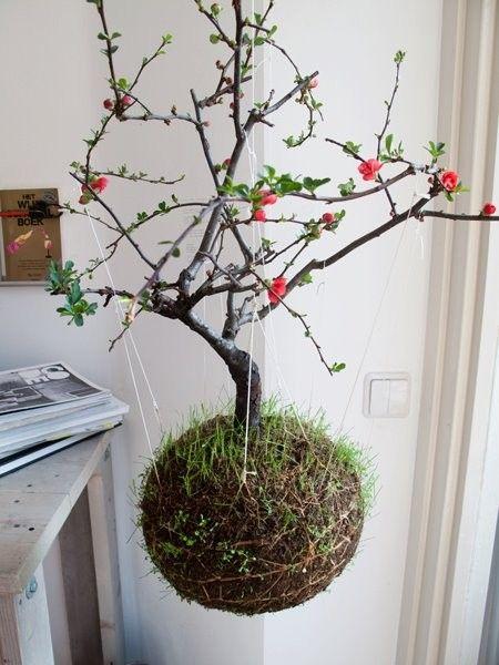 fedor-van-der-valk-string-gardens-3