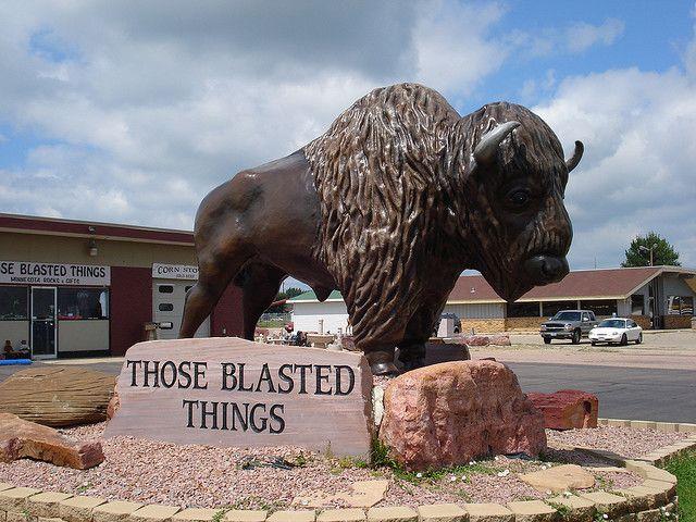 22+ Giant buffalo information