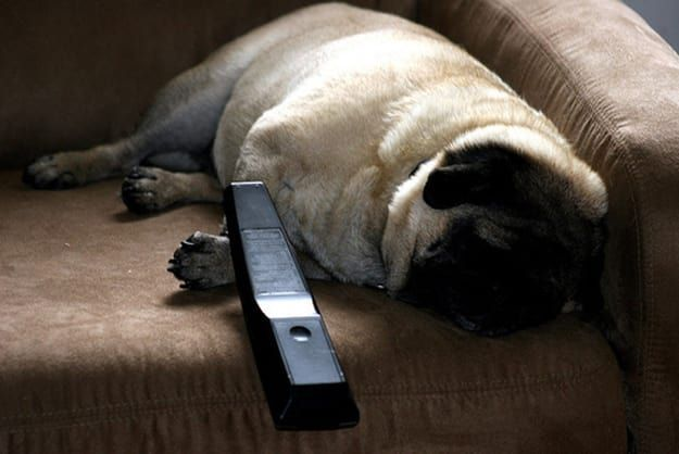23 Perks Of Working From Home Pug Mug Health Wellness Pugs