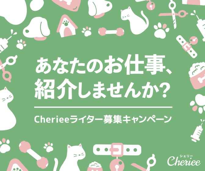 Cheireeライター募集キャンペーン Cheriee ペットの幸せを一緒に考える パンフレット デザイン バナー チラシ