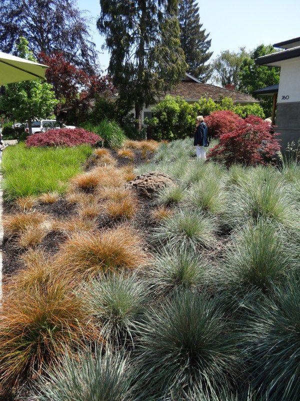 Gentil Ornamental+grasses+landscaping | Blue Oat Grass Bronze Carex And Blue Moor  Grass Sesleria Caerulea I
