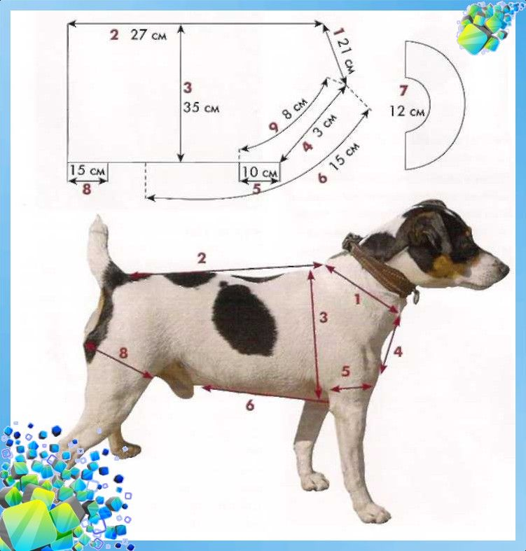 Снимаем мерки с собаки | mascotas y mascotas | Pinterest | Mascotas ...