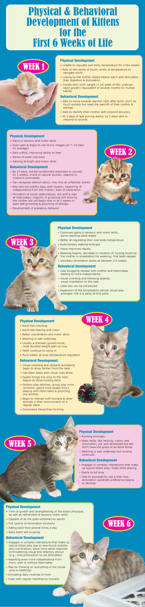 Cats And Kittens Facts Cats And Kittens Love Newborn Kittens Kitten Care Baby Cats