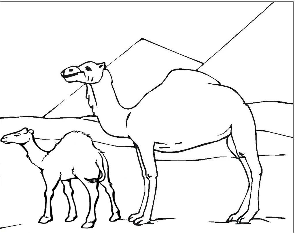 Pin Di Camel Coloring Pages Animal And Alphabet Learning