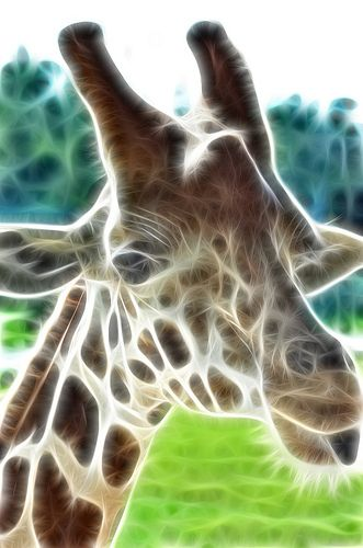 animal fractals | topics: fractalius giraffe animal fractal