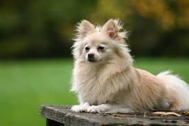 Bildresultat för dogs