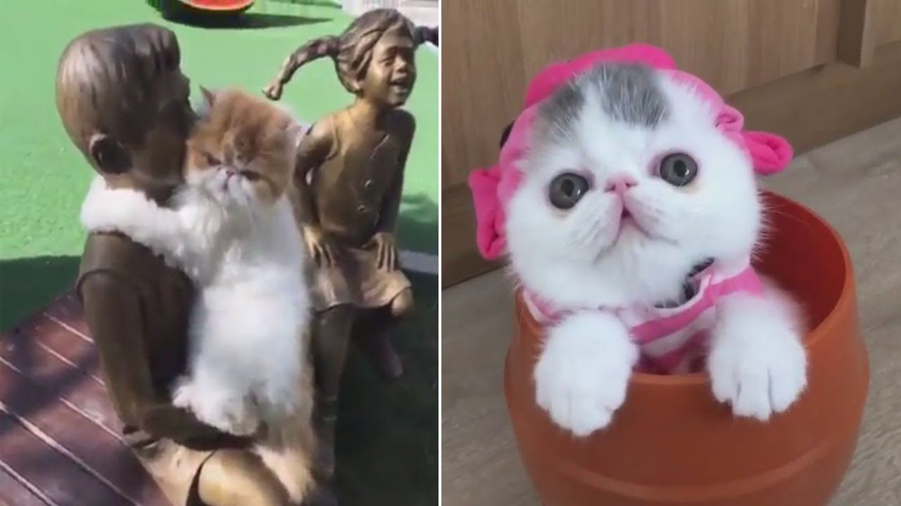 Baby Cats Cute And Funny Cat Videos Compilation 19 Cats Tv Show In 2020 Baby Cats Funny Cats Funny Cat Videos