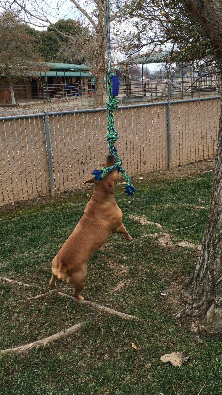 Spring Pole By Springpole247 On Etsy Outdoor Dog Toys Outside