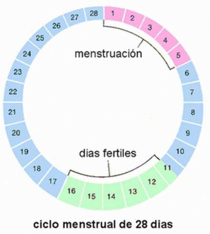 Calculadora De Ovulación Saca Provecho A Tus Días Fértiles Calculadora De Ovulacion Calculadora De Embarazo Ciclo Menstrual
