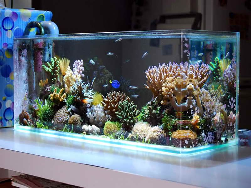 Indoor cool saltwater aquarium design ideas picture for Aquarium house decoration