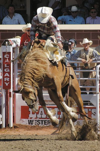 Beautiful imaging from worldwideticketing.com  This is the heart of the Stampede and of Calgary; cowboy spirit, relentless drive, and the ability to pick yourself up, dust yourself off, and get back in the saddle again!