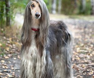 Animals With Really Cool Hairstyles - Cutest Paw