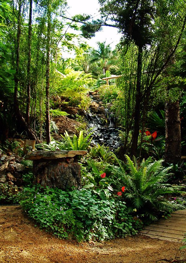 rainforest garden - 1 day!   Tropical garden design, Garden ... on tropical garden design, desert garden design, wetland garden design, subtropical garden design, bird friendly garden design, coastal garden design, jungle garden design, tree garden design,
