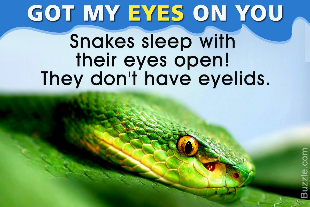 Information About Snakes