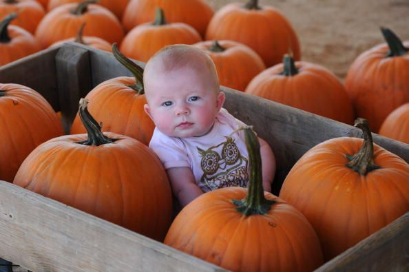 Polyester Power Hour Halloween Edition [VIDEOS] | Baby in pumpkin, Pumpkin  patch pictures, Pumpkin patch photography