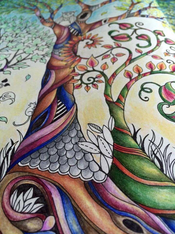 Trees Owl Enchanted Forest Arvores Coruja Floresta Encantada