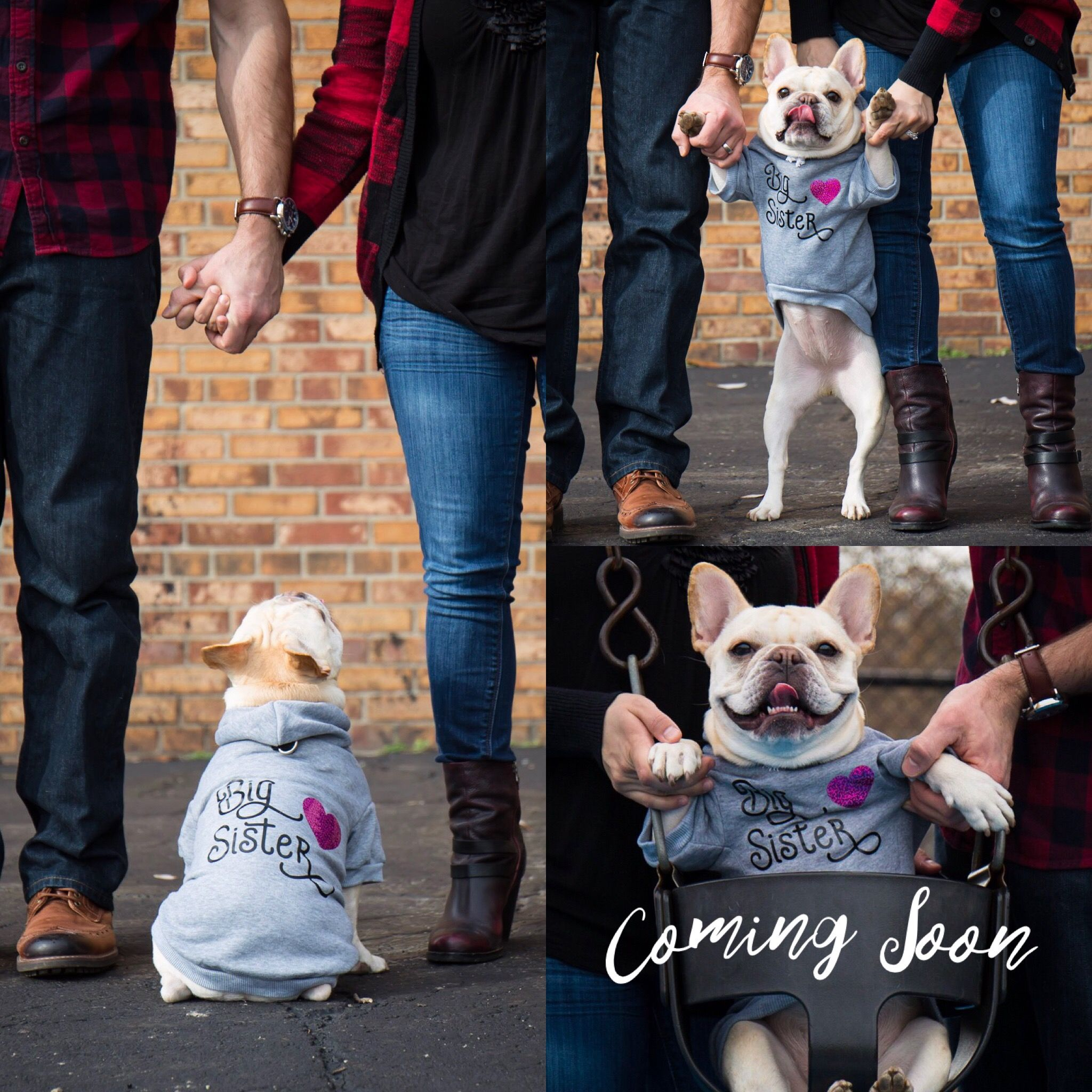 158e42b03 Pregnancy Announcement - French Bulldog   Oh Baby!   French bulldog ...