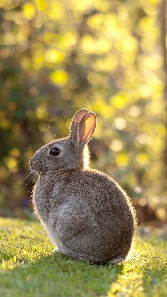 Скачать 540x960 Кролик, заяц, трава, солнечный свет обои ...