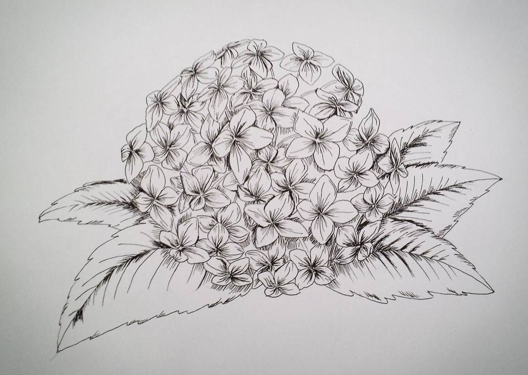 Black Line Flower Drawing : Black and white vintage fangirl part
