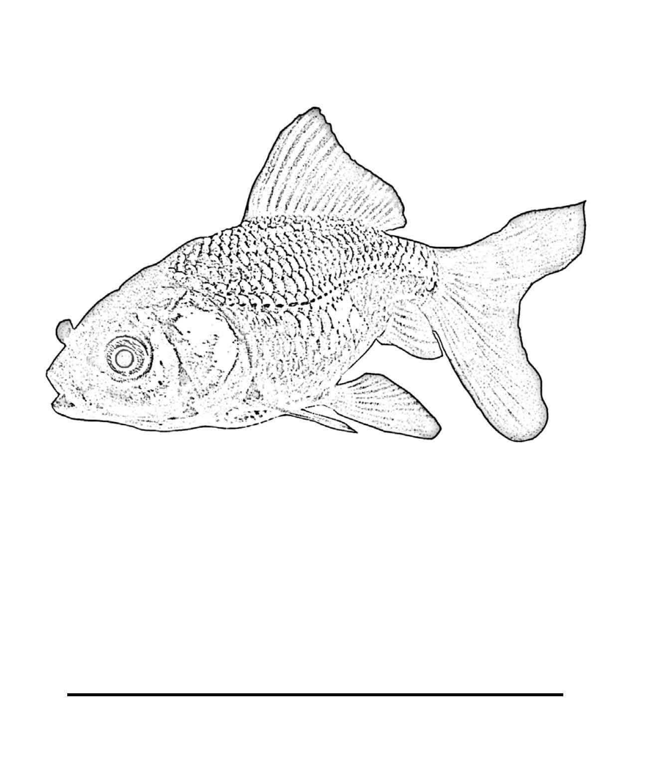 Maitri Outline For Parts Of Fish