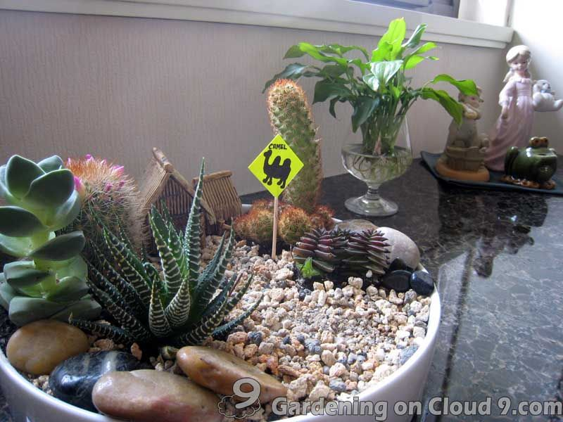 Indoor Cactus Garden Indoor Cactus Garden - Josaelcom Plant Your
