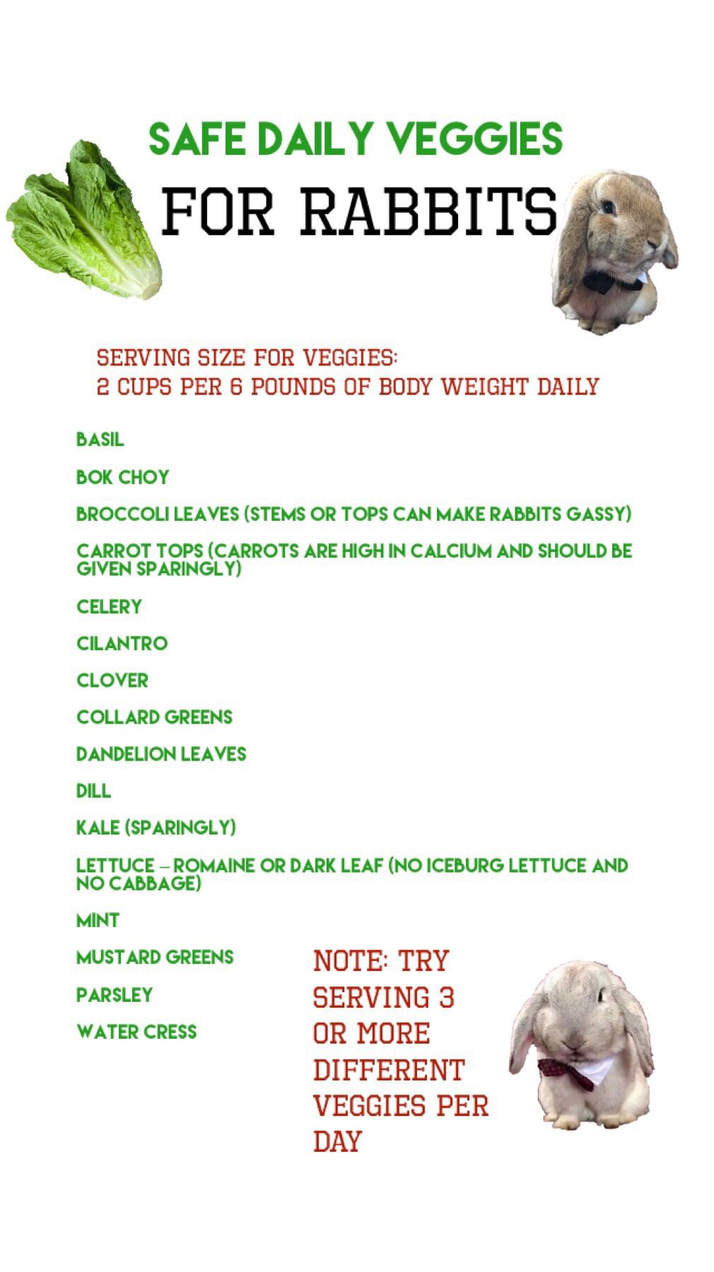 A List Of Safe Vegetables To Feed Your Rabbit Veggies Bunny Rabbits List Pet Bunny Rabbits Pet Bunny Rabbit Diet