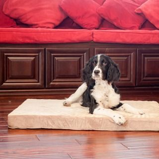 Overstock com Mobile | Pet Stuff | Dog bed, Dogs, Pet dogs