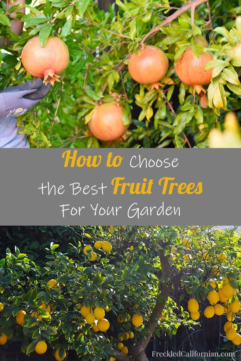 Things To Consider When Buying A Fruit Tree Buy Fruit Trees Growing Fruit Trees Fruit Trees