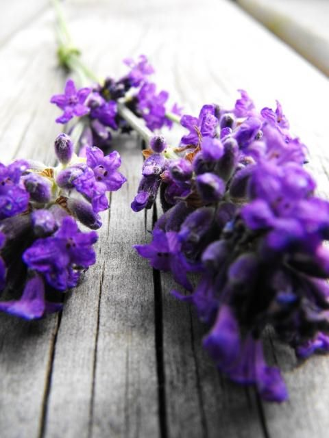 macro lavender flower bouquet [I\'m going to do this] | All thing\'s ...