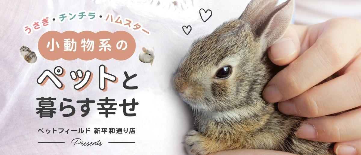 Pet Banner Pc うさぎ ペット ペット デジタルバナー