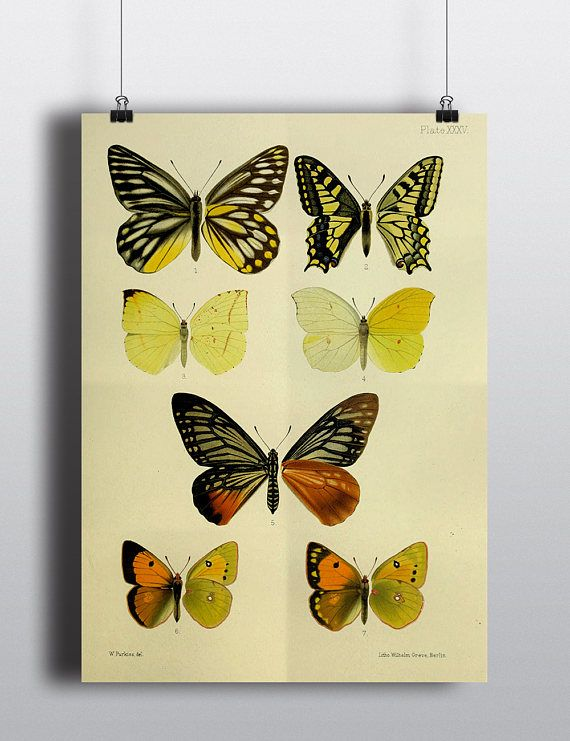 Butterfly Wall Art Digital Download Instant Download Printable Art ...