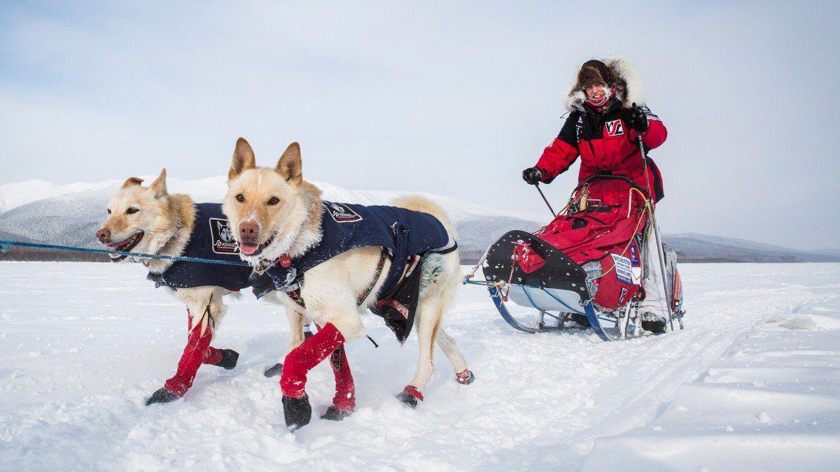 Pin On Iditarod