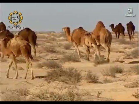 Pin On تاريخ العرب
