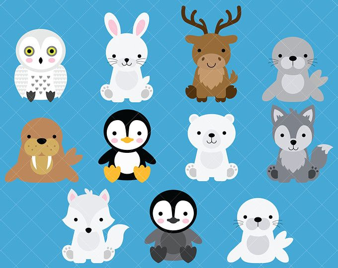 Arctic Animals Clipart And Paper Set Arctic Clipart Etsy Baby Animal Drawings Polar Animals Arctic Animals