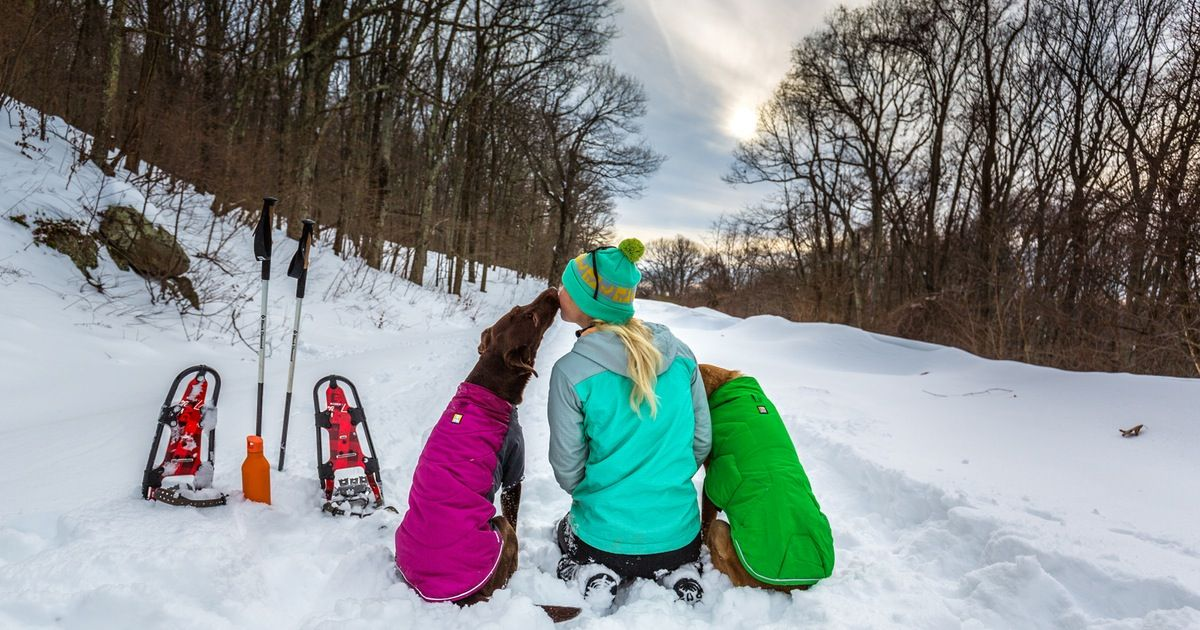 Photo of 7 Tips For Winter Adventures With Your Dog