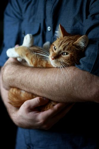 In my cat daddy's arms