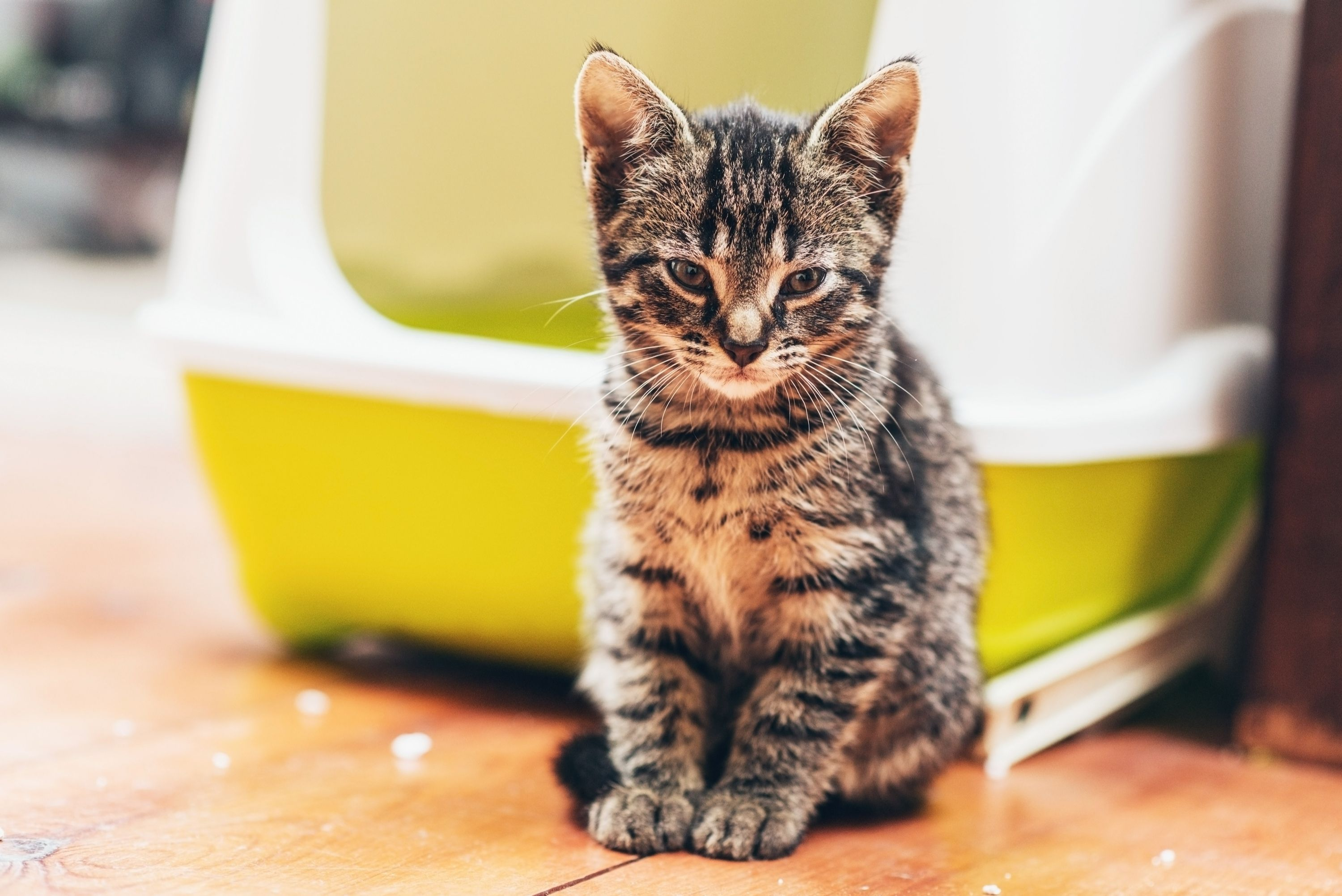 5 Best Types of Natural Cat Litter How to Choose