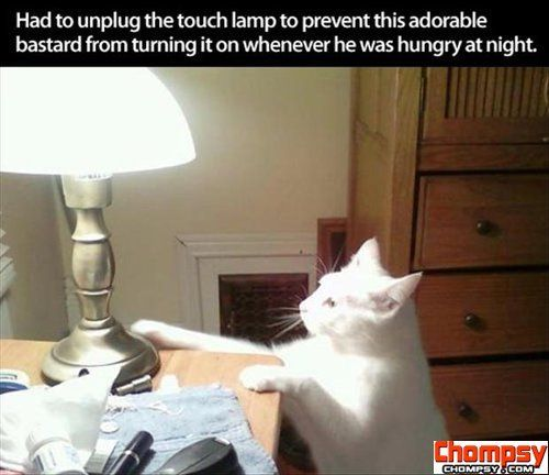 funny pictures touch lamp and the cat1